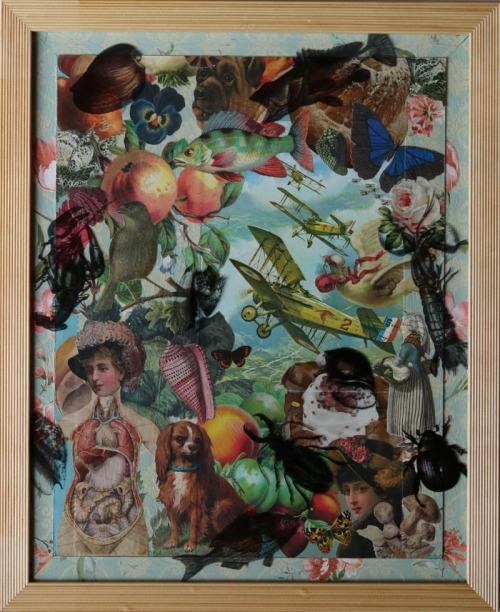 Cabinet de Curiosités 1 (p)